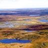 Tundra Rusijos šiaurėje