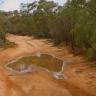 Australjos formos natūrali bala