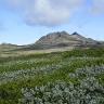 kalnu-tundra-islandijoje
