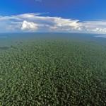 Amazon-rainforest--008