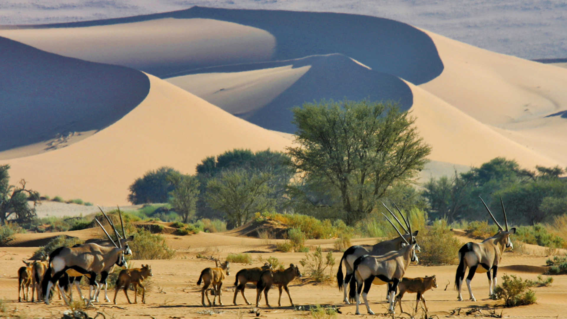 Namibija_gyvunai