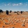 Kalahario dykuma