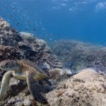 google-underwater-street-view