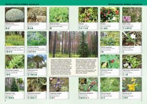 Augalu-ir-gyvunu-atlasas